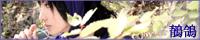 nepenthe+/唯紺